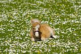 Horse foal on flower meadow