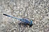 dragonfly in garden
