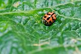 ladybug in green nature