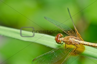 dragonfly in garden