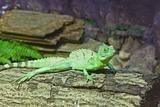 little lizard on a stick