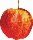 Red-yellow apple