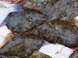 Fresh flatfish in a box on the pier