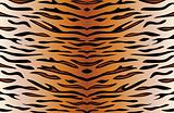 tiger skin