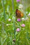 Butterfly FIeld