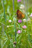 Butterfly FIeld