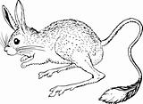 Jerboa