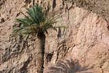 Lone Palm Tree in Israel