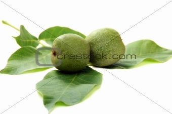 Green fruit of a walnut