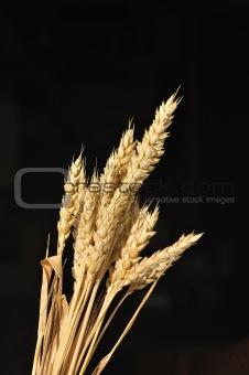 Golden cereal