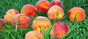 Peach over grass