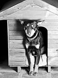 Dog sitting at the entrance of his doghouse