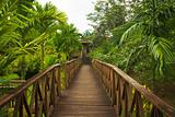 Wooden Walkway Jungle Sepilok Borneo