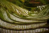 Steep Flooded Rice Terraces at Longji