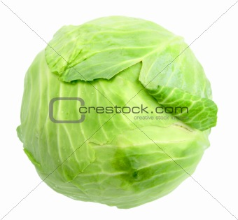 Single green cabbage with dew