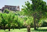 orange trees near walls of medieval church in Sicily