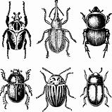 Beetles