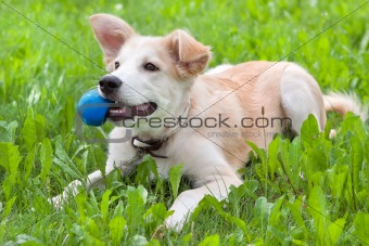 puppy with a ball in his teeth