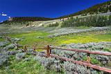 Bighorn National Forest Scenery