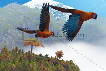 Cuban Red Macaw