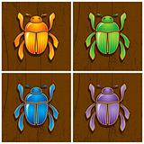 Illustrations of beetles