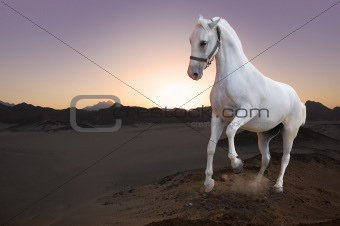 White horse in the desert