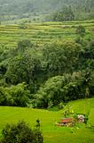 rice fields terraces in bali indonesia