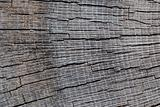 torn wood