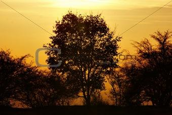 autumn tree and sun