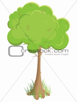 green tree. Isolated on white background