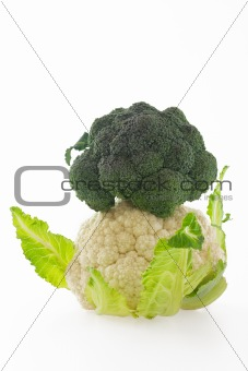 Cauliflower and broccoli on white background