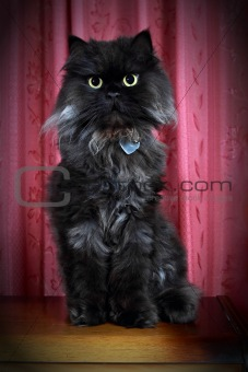 Black Persian cat posing on commode!