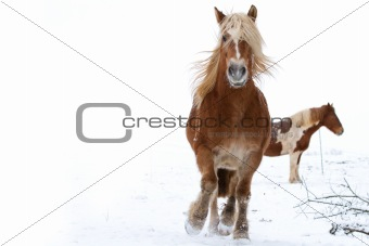 A running horse in a snowy landscape