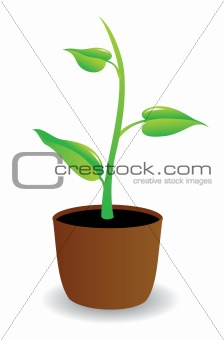 A potted plant beginning to grow.