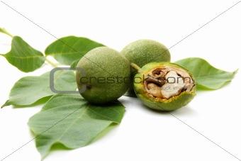 Green fruit of a walnut.