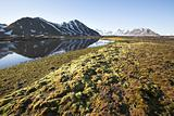 Arctic summer landscape - tundra, sea and mountains