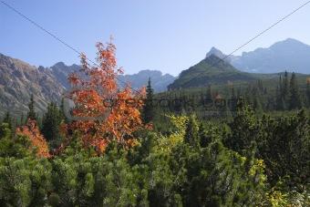 Alpine mountain summer landscape