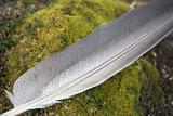 Feather on green tundra - Arctic, Spitsbergen