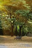 A bench in a autumn park