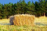 Wafer of hay