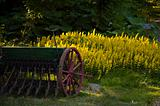 Antique seeder on a lawn.
