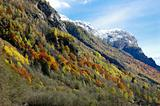 Mountain autumn scenic