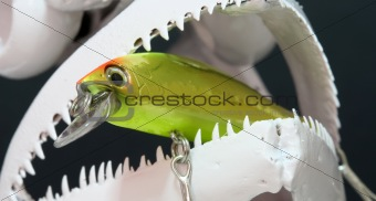 Fish Skull And Lures