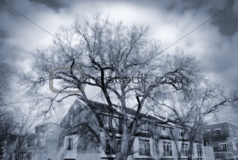 Dramatic Trees