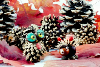 acorn animals