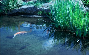 beautiful colored fish