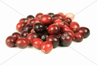 Cranberries on white