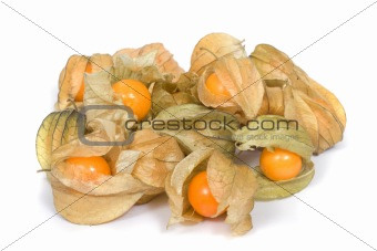 Ground-cherry  (Physalis)