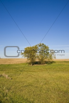 Trees in Autumn Fields