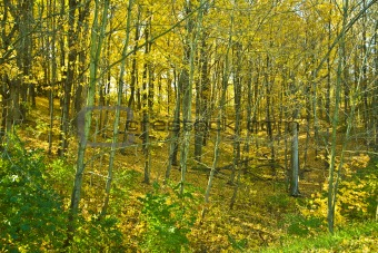 Autumn Leaves in the Ravine